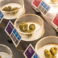 Colorado and Washington Laid the Groundwork for California to Set the New Gold Standard of Marijuana Legalization